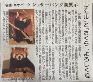 レッサーパンダ新報記事